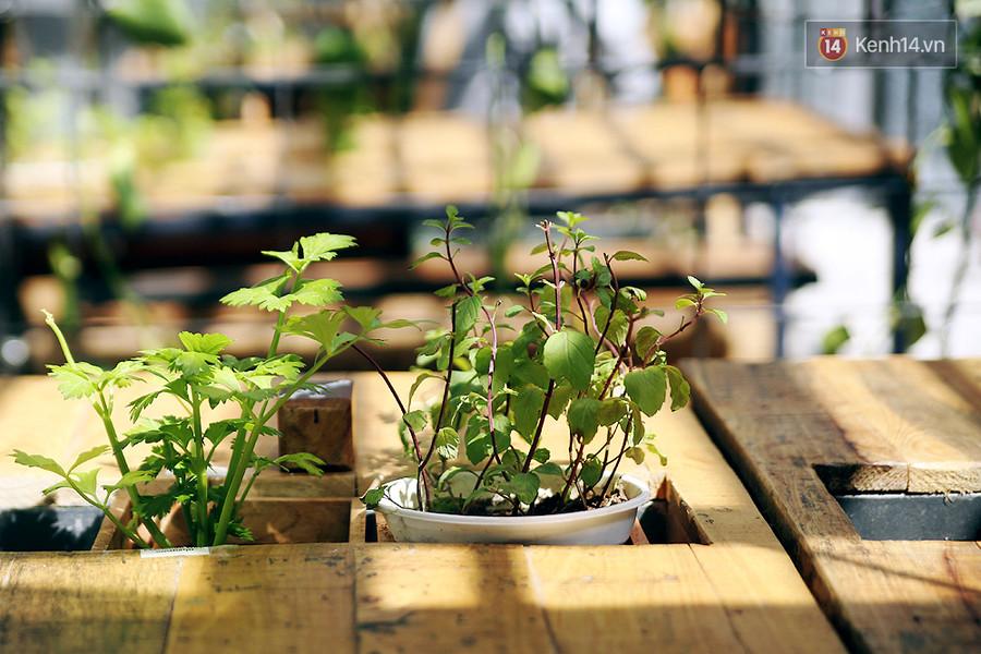 Bạc hà và cần tây được trồng trên bàn để khách thưởng thức khi cần.