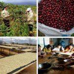 Laha Coffee – Khởi đầu với xe đẩy, sai đâu sửa đó và thành quả sau 4 năm